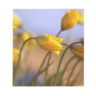 Close-up of daffodils notepad