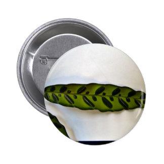 Close-up of dark green leaf pins