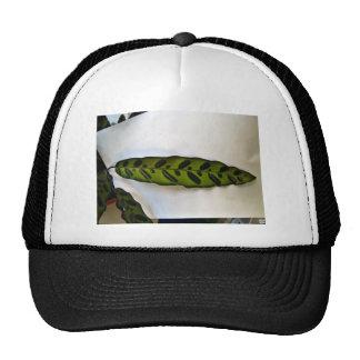 Close-up of dark green leaf trucker hat