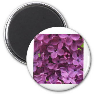 close up of dark purple lilac magnet