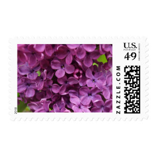 close up of dark purple lilac postage stamps