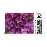 close up of dark purple lilac stamp