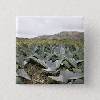 Close-up of Desert Plants, Presidio, Texas, USA Button