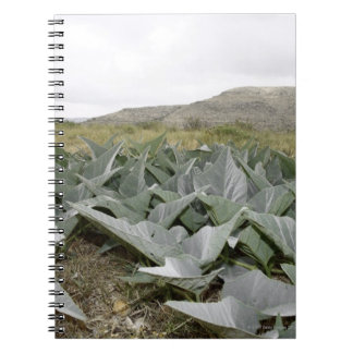Close-up of Desert Plants, Presidio, Texas, USA Notebook