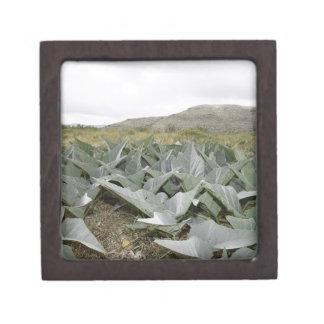 Close-up of Desert Plants, Presidio, Texas, USA Premium Trinket Boxes