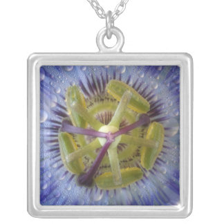 Close-up of dewy passion flower. Credit as: Don Silver Plated Necklace
