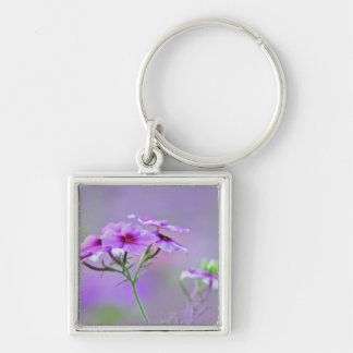 Close-up of Drummond Phlox, Phlox drummondi, Silver-Colored Square Keychain