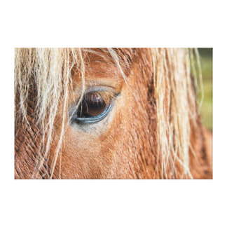 Close-up of eye and head of Icelandic horse Canvas Print