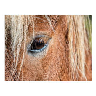 Close-up of eye and head of Icelandic horse Postcard