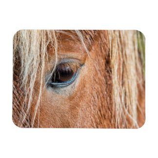 Close-up of eye and head of Icelandic horse Vinyl Magnet