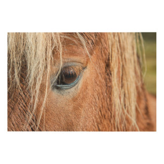 Close-up of eye and head of Icelandic horse Wood Wall Art