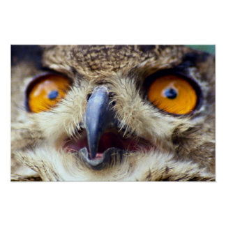 Close-up of eyes of eagle owl poster