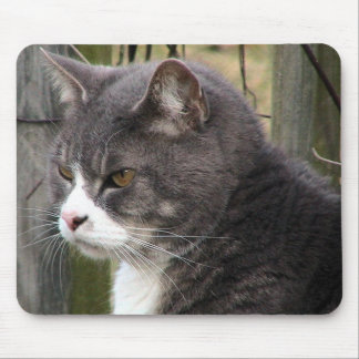 Close-Up Of Fat Black Tabby Cat With Brown Eyes Mouse Pad