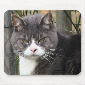 Close-Up Of Fat Black Tabby Cat With Brown Eyes Mousepads