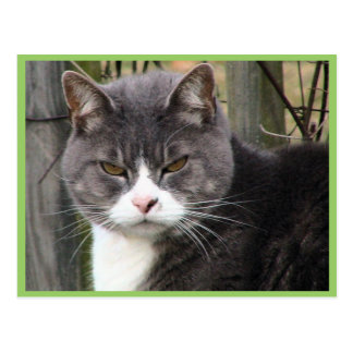 Close-Up Of Fat Black Tabby Cat With Brown Eyes Postcard