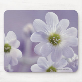 Close-up of flowers 2 mouse pad