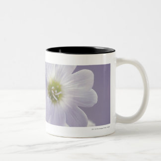 Close-up of flowers 2 Two-Tone coffee mug
