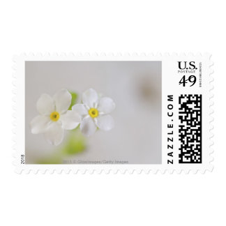 Close-up of flowers postage stamps