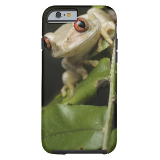 Close up of Forest Tree Frog (Leptopelis Tough iPhone 6 Case