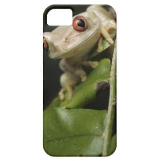 Close up of Forest Tree Frog (Leptopelis iPhone 5 Cases