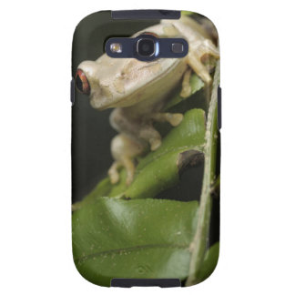 Close up of Forest Tree Frog (Leptopelis Galaxy S3 Cover