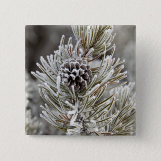 Close-up of frozen pine cone, Yellowstone Button