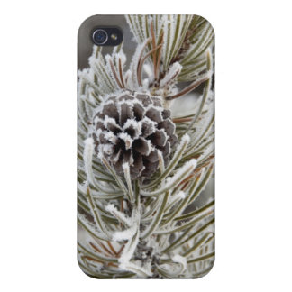 Close-up of frozen pine cone, Yellowstone iPhone 4 Case