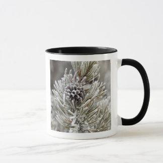 Close-up of frozen pine cone, Yellowstone Mug