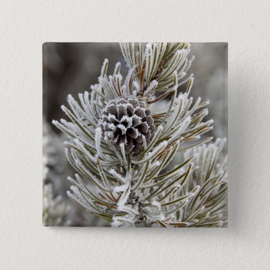 Close-up of frozen pine cone, Yellowstone Pinback Button