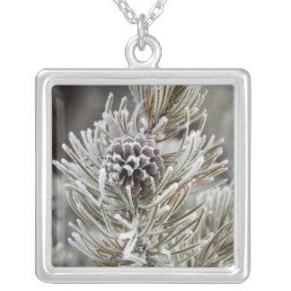 Close-up of frozen pine cone, Yellowstone Square Pendant Necklace