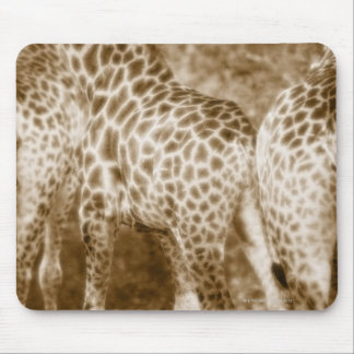 Close-Up of Giraffes Kruger National Park South Mouse Pad