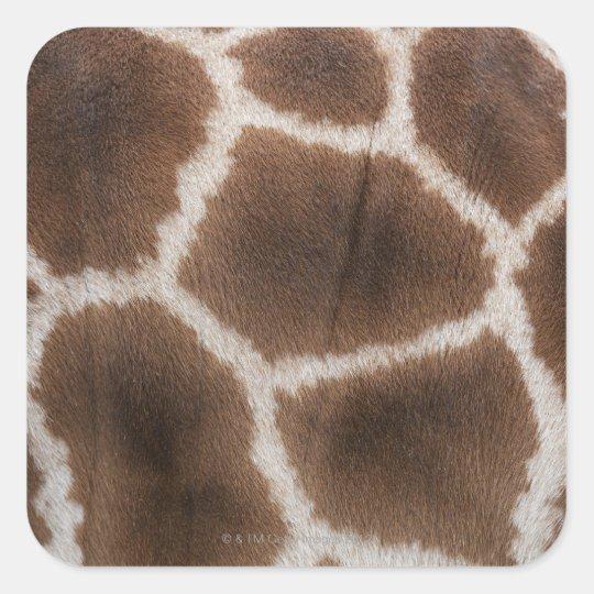 Close up of Giraffes Skin Square Sticker
