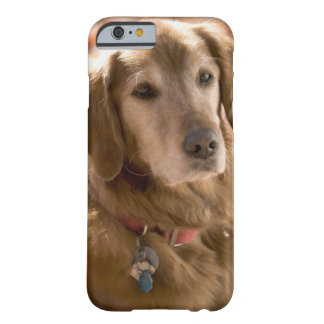 Close up of golden labrador retriever dog barely there iPhone 6 case