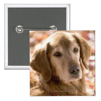 Close up of golden labrador retriever dog button