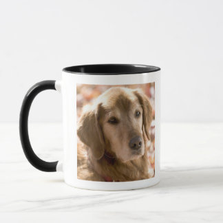 Close up of golden labrador retriever dog mug
