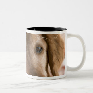 Close up of golden labrador retriever dog Two-Tone coffee mug