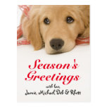 Close-up of Golden Retriever puppy with ribbon Postcard