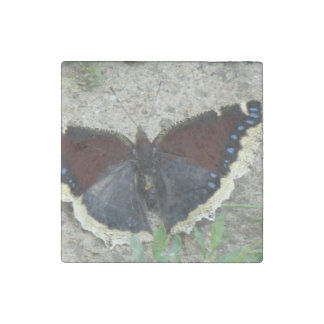 Close up of Gorgeous Mourning Cloak Butterfly Stone Magnet