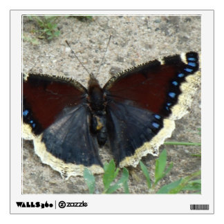 Close up of Gorgeous Mourning Cloak Butterfly Wall Decal