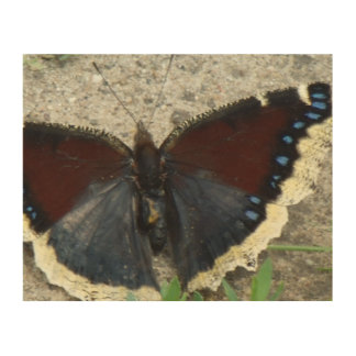 Close up of Gorgeous Mourning Cloak Butterfly Wood Wall Decor