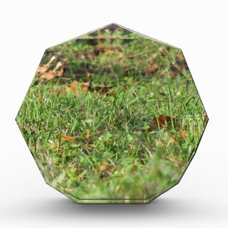 Close up of green grass field and autumn leaves award