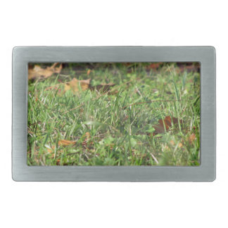 Close up of green grass field and autumn leaves belt buckle