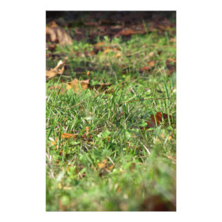 Close up of green grass field and autumn leaves stationery