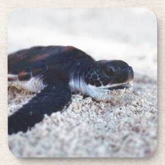 Close-Up of green sea turtle hatchings 1 Drink Coaster