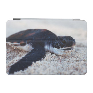 Close-Up of green sea turtle hatchings 1 iPad Mini Cover