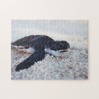 Close-Up of green sea turtle hatchings 1 Jigsaw Puzzle