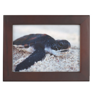 Close-Up of green sea turtle hatchings 1 Keepsake Box