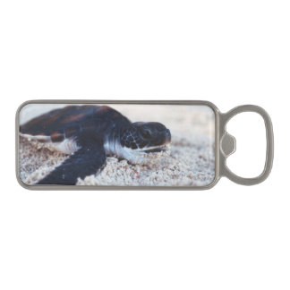 Close-Up of green sea turtle hatchings 1 Magnetic Bottle Opener
