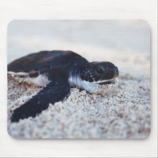 Close-Up of green sea turtle hatchings 1 Mouse Pad