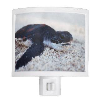 Close-Up of green sea turtle hatchings 1 Night Light
